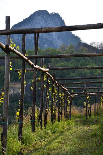 mucci imports le vigne di raito